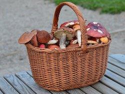 Время варки грибов