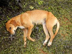 Мертвая собака во сне