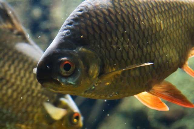 ryba-muzhchine