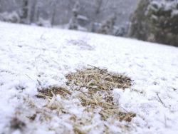 Снег, выпавший летом