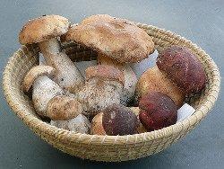 Как варить белые грибы?