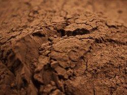 Как и сколько варить какао из какао-порошка на молоке, на воде?