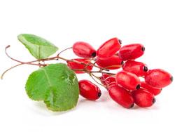 Кустарник барбариса - полезные свойства, состав, калорийность