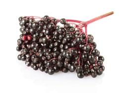Черная бузина - полезные свойства и противопоказания