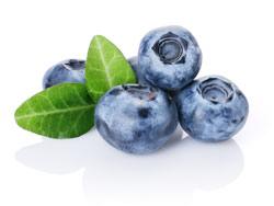 Чем полезна ягода черника для организма человека?