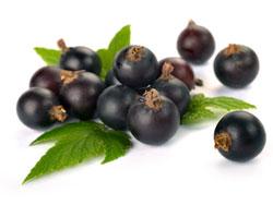 Черная смородина - польза и вред для здоровья организма человека