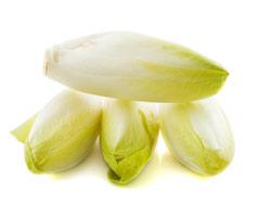 Цикорий - польза и вред для здоровья