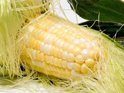 Кукурузные рыльца - полезные свойства и противопоказания