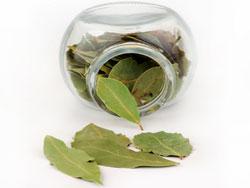Лавровый лист - полезные свойства и противопоказания