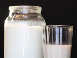 Тибетский молочный гриб - польза и вред для организма