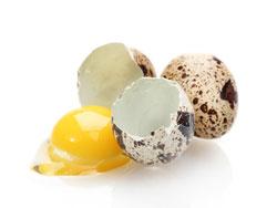 Перепелиные яйца - польза и вред для организма мужчин и женщин