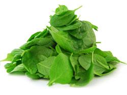 Шпинат - полезные свойства, калорийность. Чем полезен шпинат