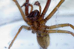 К чему снятся большие пауки?
