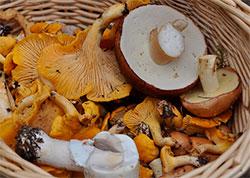 К чему снятся грибы женщине?