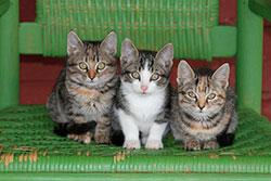 К чему снятся маленькие котята женщине и мужчине?