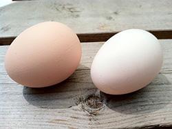 К чему снятся куриные яйца: много, разбитые, вареные, сырые