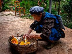 Лесник собирает грибы