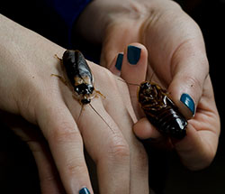 К чему снятся тараканы во сне женщине?